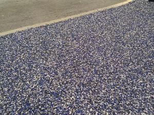blue chip garage 8